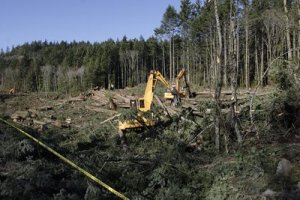 bearmountainclearcut